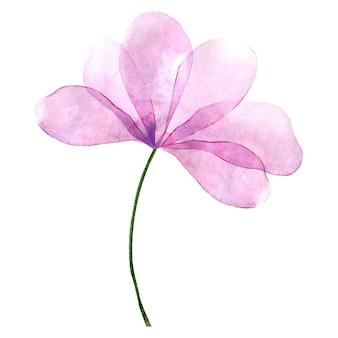 Aquarel licht paarse bloem geïsoleerd op een witte achtergrond
