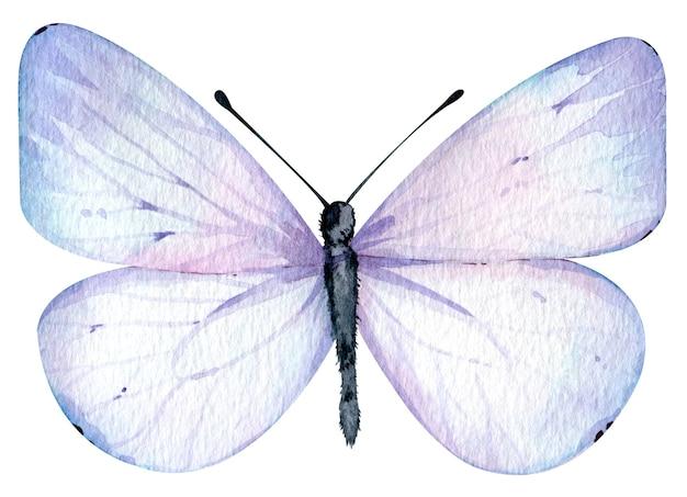 Aquarel lichtblauwe vlinder geïsoleerd op de witte achtergrond