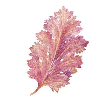 Aquarel met gestileerde acanthusbladeren