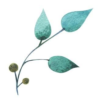 Aquarel mint smaragdgroene bladeren met stengel en bes in minimalistische stijl