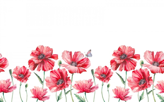 Aquarel naadloze grens met poppy bloemen en bladeren.