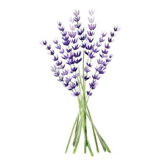 Aquarel naadloze patroon met lavendel planten