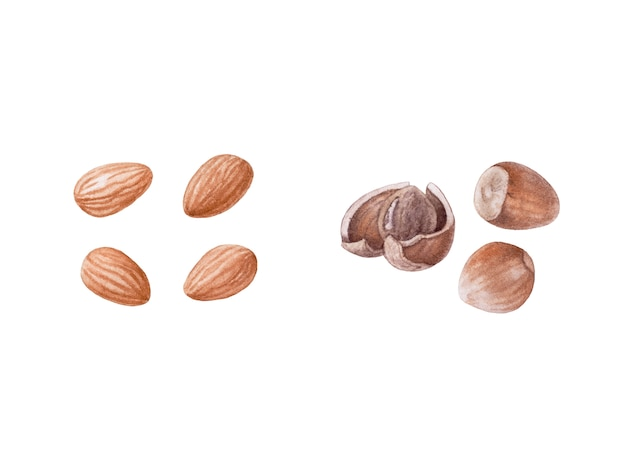 Aquarel noten. amandel, hazelnoten.