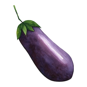 Aquarel paarse aubergine illustraties.