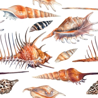 Aquarel patroon met schelpen op een witte achtergrond.