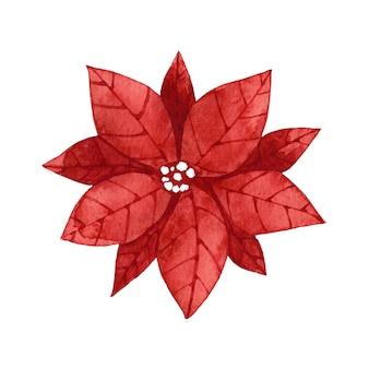 Aquarel rode poinsettia bloem illustraties.