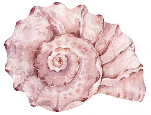 Aquarel romige roze zeeschelp geïsoleerd op de witte muur voor uw menu of ontwerp. met de hand getekende illustratie.