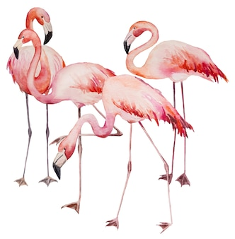 Aquarel roze flamingo's. exotische vogels geïsoleerde illustratie voor bruiloft briefpapier, groeten, behang, mode, posters