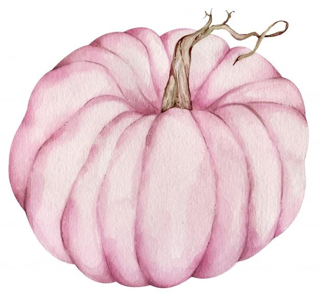 Aquarel roze pompoen geïsoleerd op het wit.