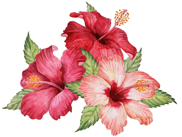 Aquarel samenstelling van hibiscus bloemen en bladeren, hand getrokken bloemen illustratie, elegant boeket geïsoleerd op een witte