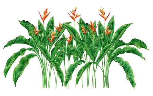 Aquarel schilderij paradijsvogel bloemen