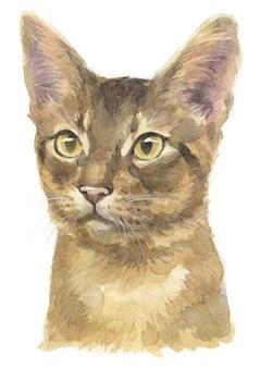 Aquarel schilderij van abessijnse korthaar kat