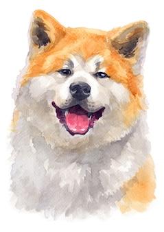 Aquarel schilderij van akita