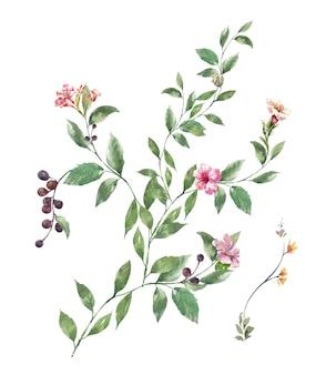 Aquarel schilderij van bladeren en bloemen, op witte achtergrond