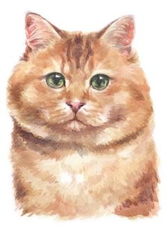 Aquarel schilderij van hosico cat