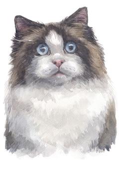 Aquarel schilderij van ragdoll