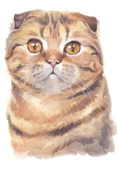 Aquarel schilderij van schotse vouw korthaar cat