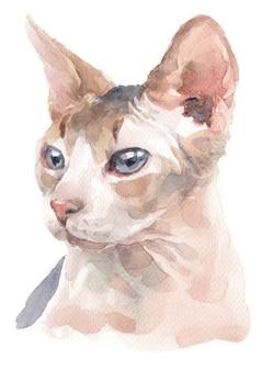 Aquarel schilderij van sphynx cat