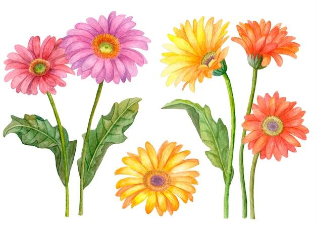 Aquarel set bloemen, hand getrokken illustratie van gerbera bloemen geïsoleerd op wit, floral collectie.