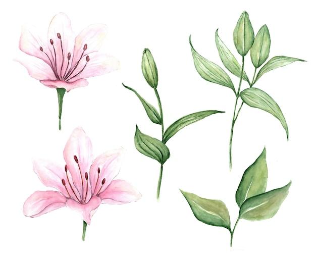 Aquarel set roze lelies hand getekende illustratie van bloemen geïsoleerd op een witte achtergrond