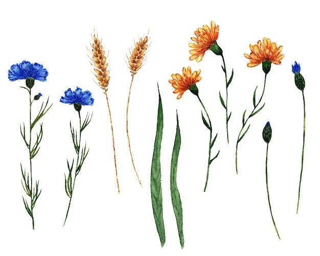 Aquarel set veldplanten hand getekende illustratie van geïsoleerd op wit