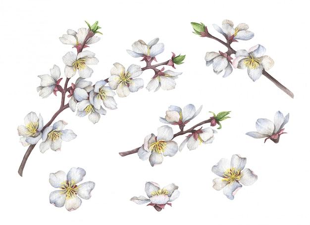 Aquarel takken met witte bloemen geïsoleerd op wit
