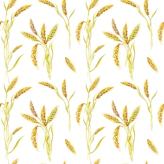 Aquarel tarwe op een witte achtergrond. naadloze patroon. aquarel zomer