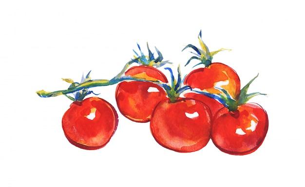 Aquarel tomaat geïsoleerd. hand getekend plantaardige illustratie. tak van cherrytomaten schilderen