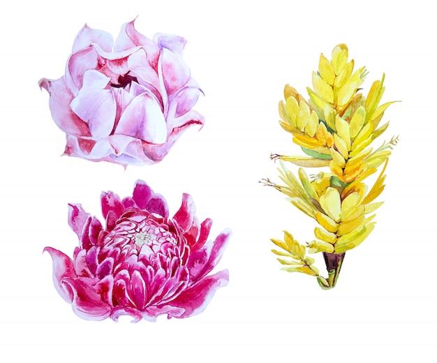 Aquarel tropische bloemen clipart set. exotische bloemen illustratie.