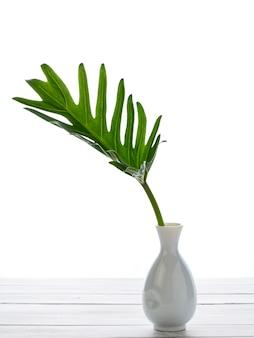 Aquarel tropische philodendron xanadu blad