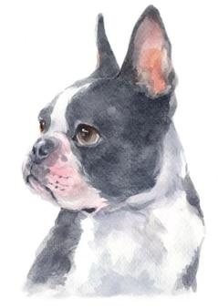 Aquarel van boston terrier