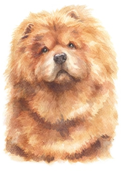 Aquarel van chow chow hond