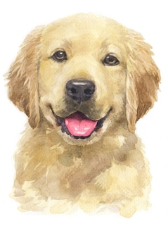 Aquarel van golden retriever