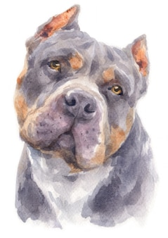 Aquarel van pitbull hond