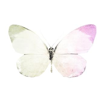 Aquarel vlinders geïsoleerd