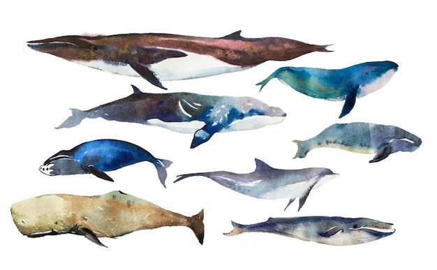 Aquarel walvissen ingesteld