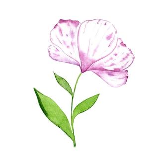 Aquarel witte en paarse bloem met groene bladeren geïsoleerd op een witte achtergrond