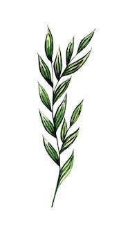 Aquarelillustratie van zeegroene algen flora-aard van waterplanten aquariumplanten