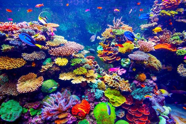 Aquarium van singapore