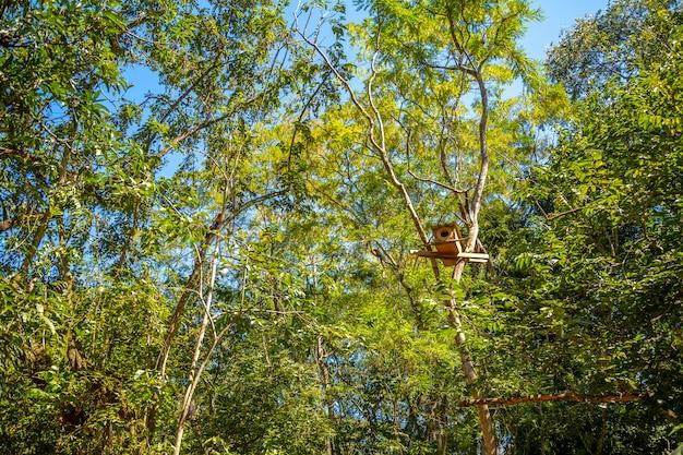 Ara boomhut in een boom in copan ruinas in honduras