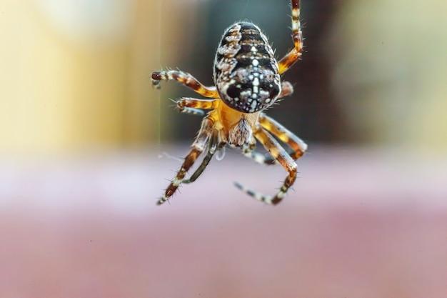 Arachnofobie angst voor spinnenbeet concept. macro close-up spin op spinnenweb spinnenweb op natuurlijke onscherpe achtergrond. leven van insecten. horror enge angstaanjagende banner voor halloween.