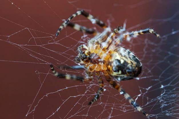 Arachnofobie angst voor spinnenbeet concept. macro close-up spin op spinneweb spinnenweb op onscherpe bruine achtergrond. leven van insecten. horror enge angstaanjagende banner voor halloween.