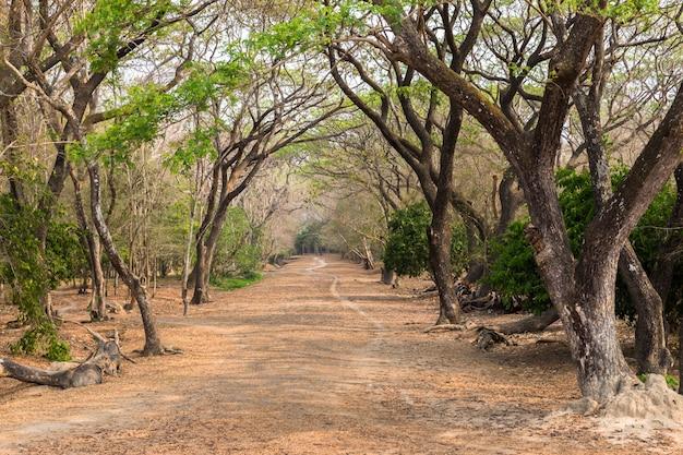 Archeologische parktempel. angkor wat cambodia