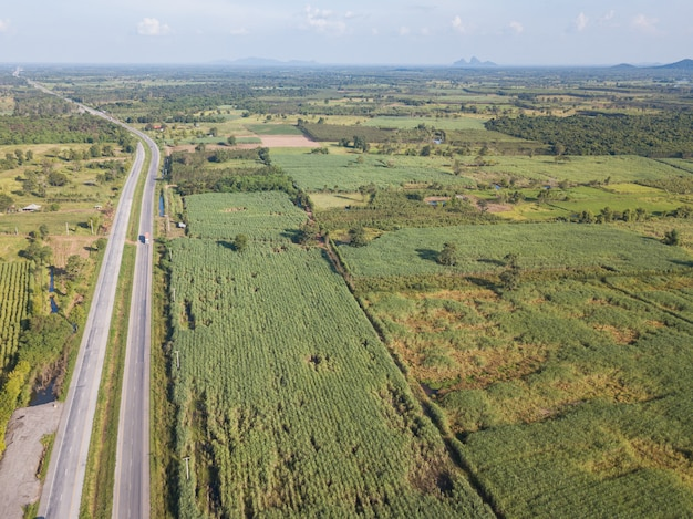Arialmening die van suikerrietgebieden dichtbij weg in middag met schaduw van wolk en aard groeien. conceptenlandbouw