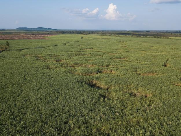 Arialmening van suikerrietgebieden die in middag met schaduw van wolk en aard groeien. conceptenlandbouw