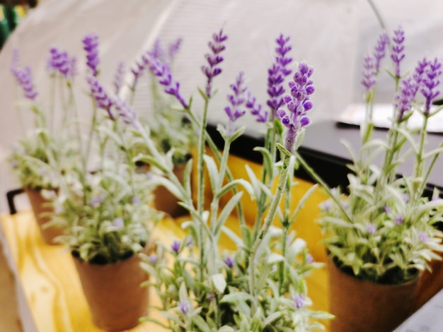 Aritificial lavendel bloemen in pot