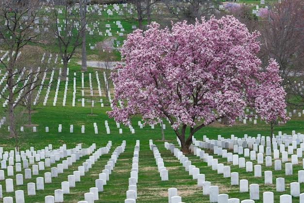 Arlington national cemetery met prachtige kersenbloesem en grafzerken, washington dc, vs.