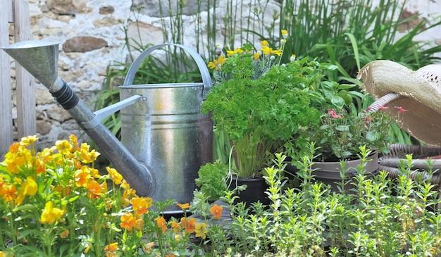 Aromatische plant en bloemen met een rustieke gieter in een tuin