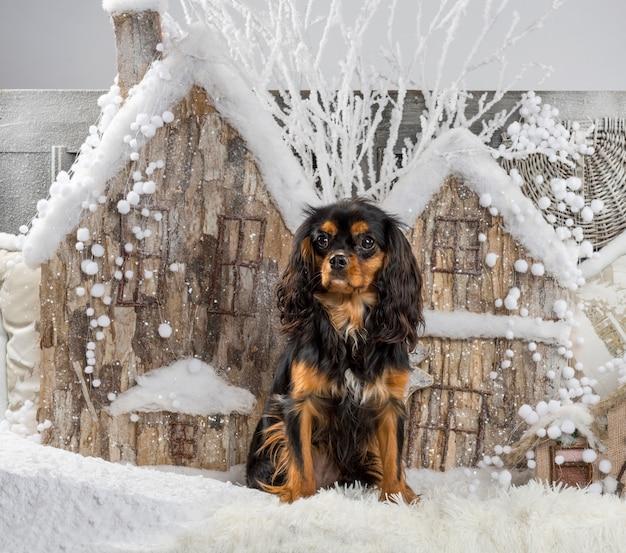 Arrogante king charles spaniel voor een kerstdecor