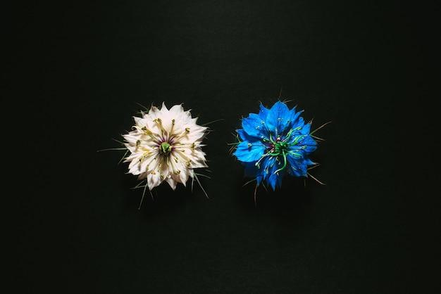 Artistieke compositie van wilde bloemen geïsoleerd op zwarte achtergrond in een studio met mooie witte en paarse bloemblaadjes.